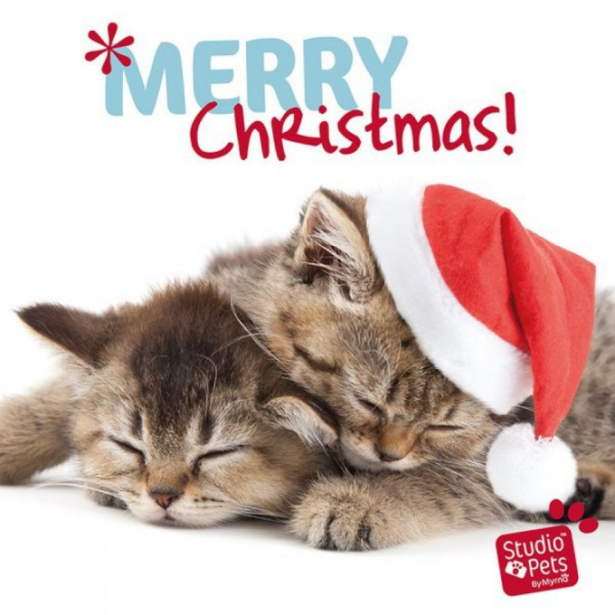 carte de noël chat merry christmas