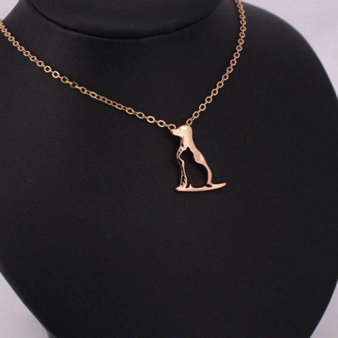 Collier chien chat