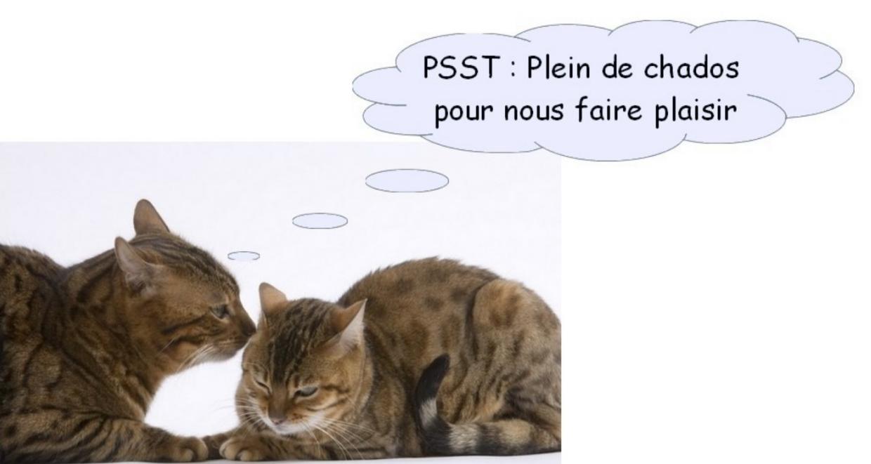 Super Tout en Chat : La boutique en ligne réservée aux amoureux des chats. PG84